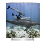 swimming Bottlenose dolphins Shower Curtain