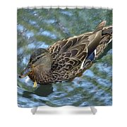 Swimming Duck  Shower Curtain