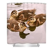 Swimming Ducklings Shower Curtain