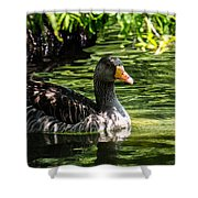 Swimming Happily Shower Curtain
