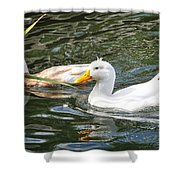 Swimming In The Pond Shower Curtain