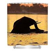Swimming Kalahari Elephants Shower Curtain