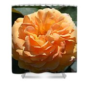 Swirling Peach Rose Shower Curtain