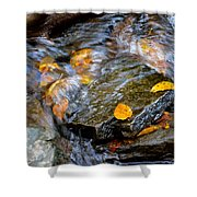 Swirling Stream Of Leaves  Shower Curtain