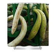 Swirly Gourds Shower Curtain