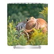 Swishing Tails Shower Curtain