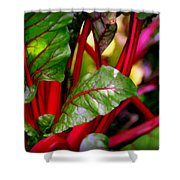 Swiss Chard Forest Shower Curtain by Karen Wiles