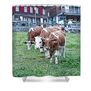 Swiss Cows Shower Curtain