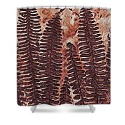 Sword Fern Fossil Shower Curtain by Katherine Young-Beck