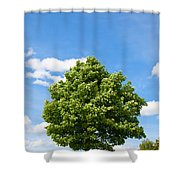 Sycamore  Acer Pseudoplatanus Shower Curtain