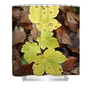 Sycamore Leaves Germany Shower Curtain