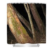 Sycamore Nightscape Shower Curtain
