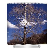 Sycamore On The Hill Shower Curtain