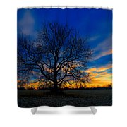 Sycamore Sunset Shower Curtain
