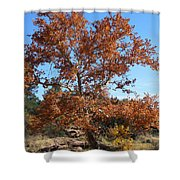 Sycamore Tree In Fall Colors Shower Curtain