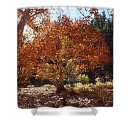 Sycamore Trees Fall Colors Shower Curtain