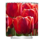 Symbolic Tulips Shower Curtain