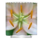 Symmetrical Flower Closeup Shower Curtain