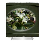 Sympathy Greeting Card - Elegant Floral Green And White Shower Curtain