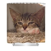 Symphony Keeping Watch Shower Curtain