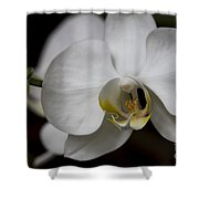 Symphony White Orchid Shower Curtain