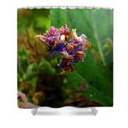 Synchlora Aerata Caterpillar 2 Shower Curtain
