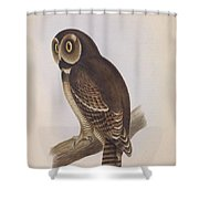 Syrnium Owl Shower Curtain