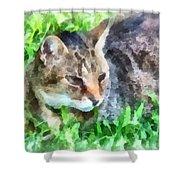 Tabby Cat Closeup Shower Curtain