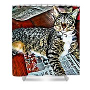 Tabby Cat On Newspaper - Catching Up On The News Shower Curtain