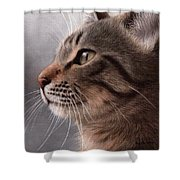 Tabby Cat Painting Shower Curtain