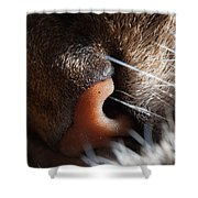 Tabby Cat's Nose Shower Curtain