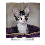 Tabby Kitten In A Purple Bed Shower Curtain