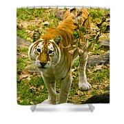 Tabby Tiger IIi Shower Curtain