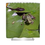 Tadpole And Frog Shower Curtain