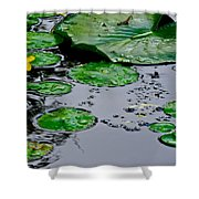 Tadpole Haven Shower Curtain by Frozen in Time Fine Art Photography