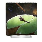 Tadpole On Lily Pad Shower Curtain