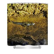Tadpole Tail Shower Curtain