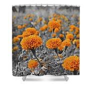 Tagetes Erecta / Aztec Marigold Flower Shower Curtain