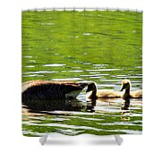 Tail Shade Shower Curtain