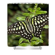 Tailed Jay Shower Curtain