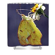 Tailed Orange Butterfly Shower Curtain