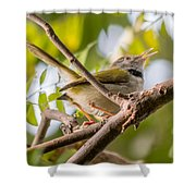 Tailor Bird Shower Curtain