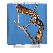 Taking Flight - Immature Bald Eagle Shower Curtain