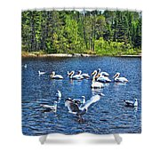 Taking Flight In Ontario Shower Curtain