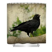 Blackbird Is Taking It All In Shower Curtain