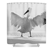 Taking The Plunge - Pelican - Bathroom Shower Curtain