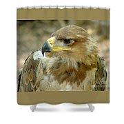 Tawny Eagle-11 Shower Curtain