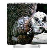 Talk Turkey Shower Curtain