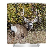 Tall And Handsome Shower Curtain