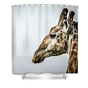 Tall And Vigilant Shower Curtain